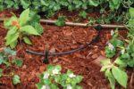 Rain Bird hose T22-250S Drip Irrigation hose Review 2018
