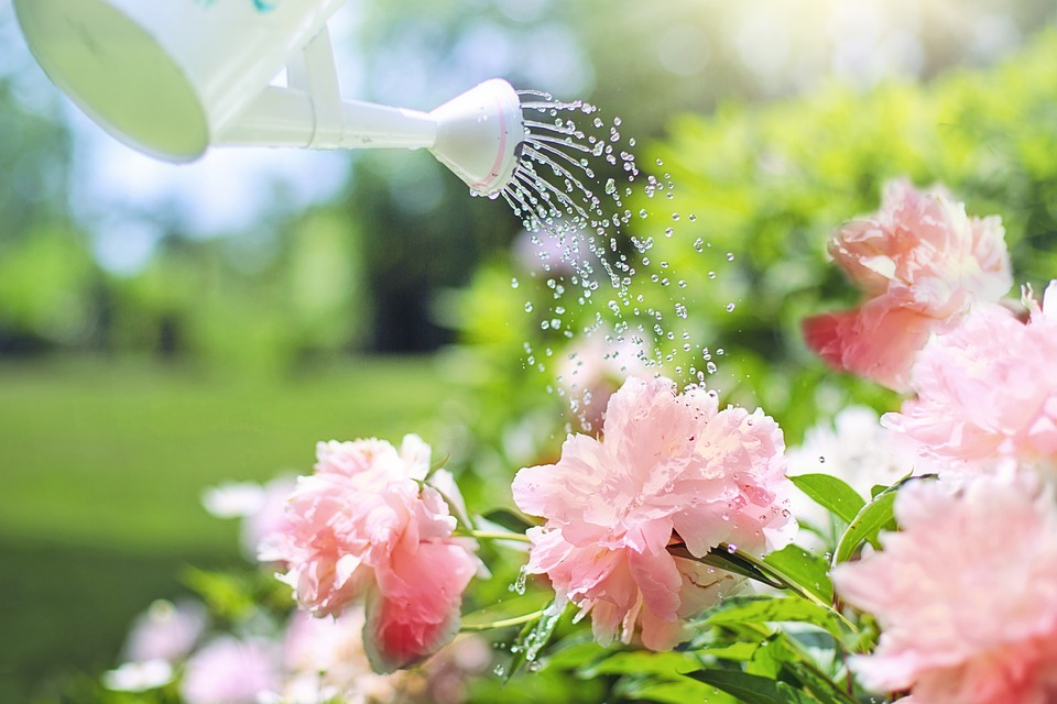 How to water a garden