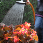 dramm watering wand reviews